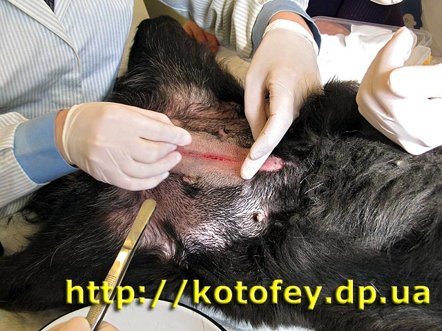 Стерилизация собак в петрозаводске сколько стоит - c90c