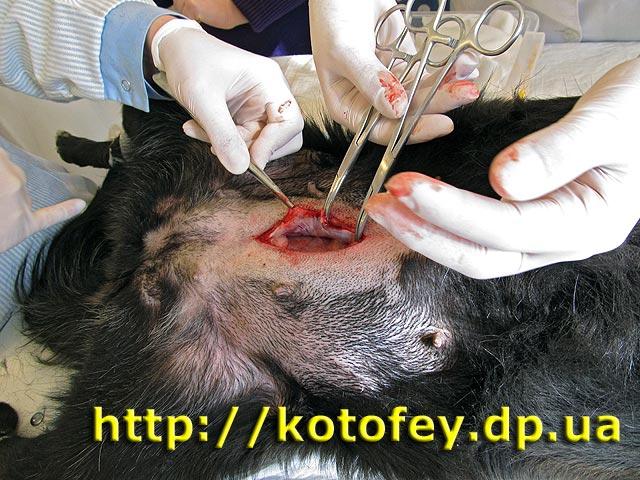 Стерилизация собак в петрозаводске сколько стоит - d